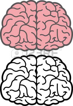 310x450 Brain Clipart Front