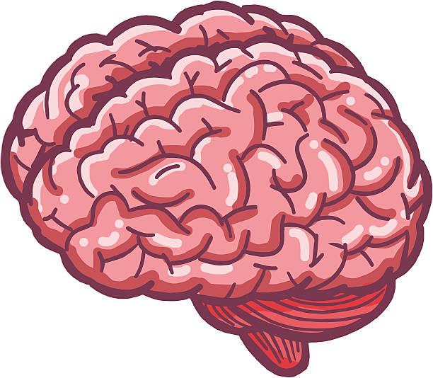 612x534 Brain Clipart Pink Brain