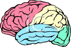 300x198 Brains Clipart Human Brain