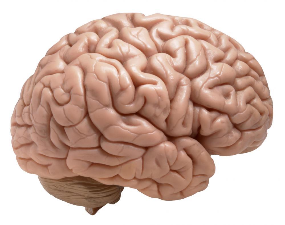 1000x787 Free Brain Clipart Image