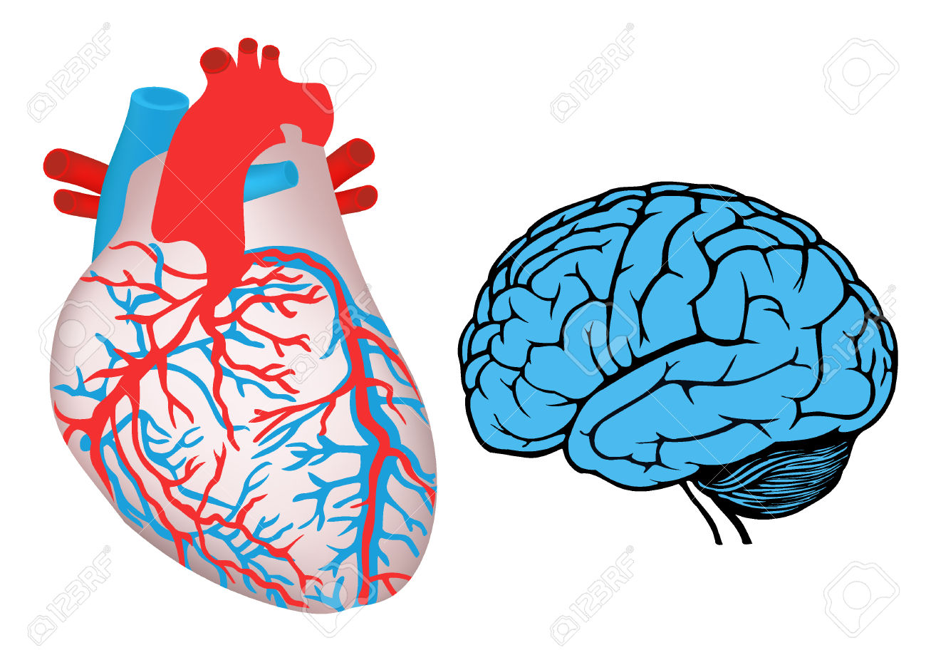 1300x919 Heart And Brain Clipart