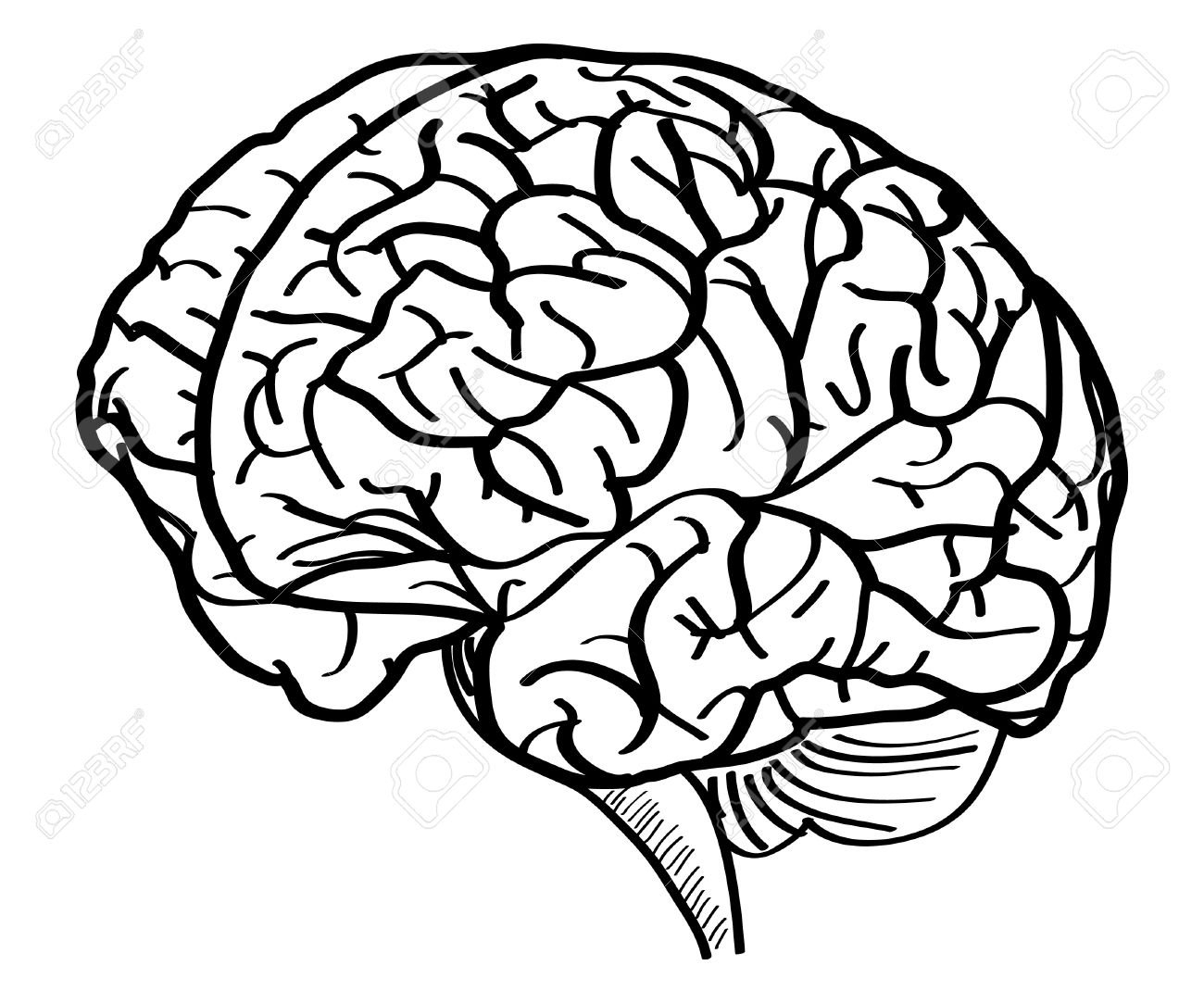 1300x1083 Human Brain Vector Outline Sketched Up, Vector Illustration