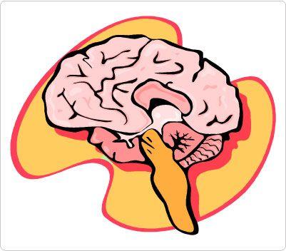 401x352 Brain Body