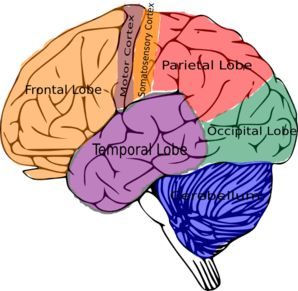 298x291 103 Best Brain Based Learning Whole Brain Teaching Images
