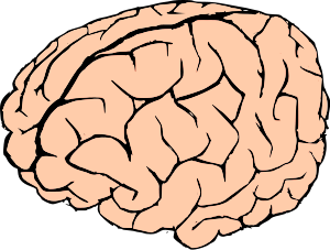 300x227 Brain Png Clip Arts For Web