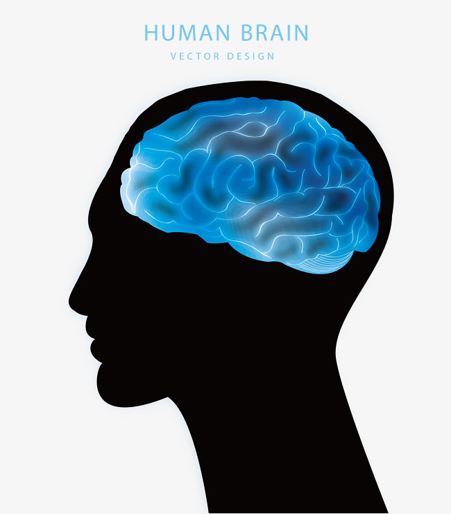 650x740 Brain Vector, Blue Brain Man Head Silhouette Vector Illustration