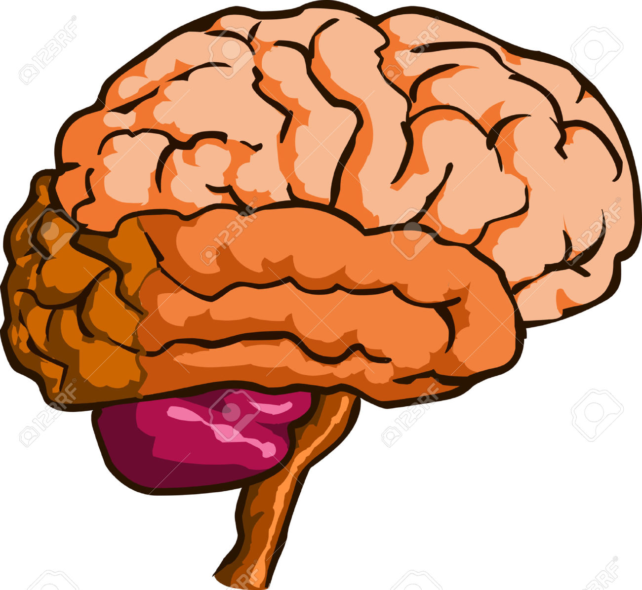 1300x1195 Human Brain Clipart Png