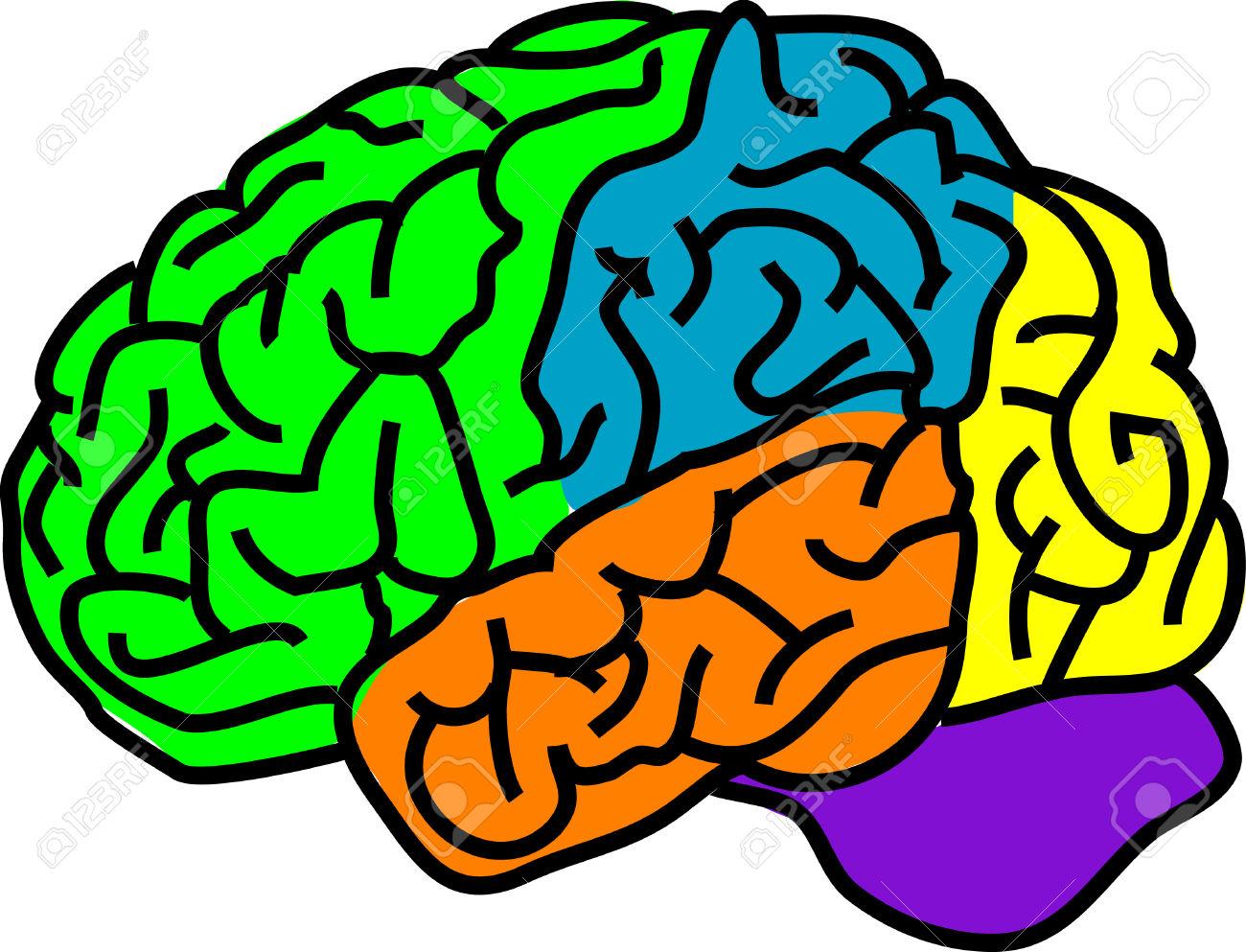 1300x993 Color Brain Clipart