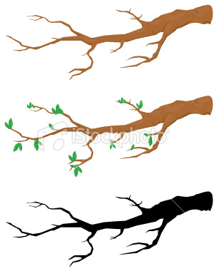304x380 Branch Clipart Outline
