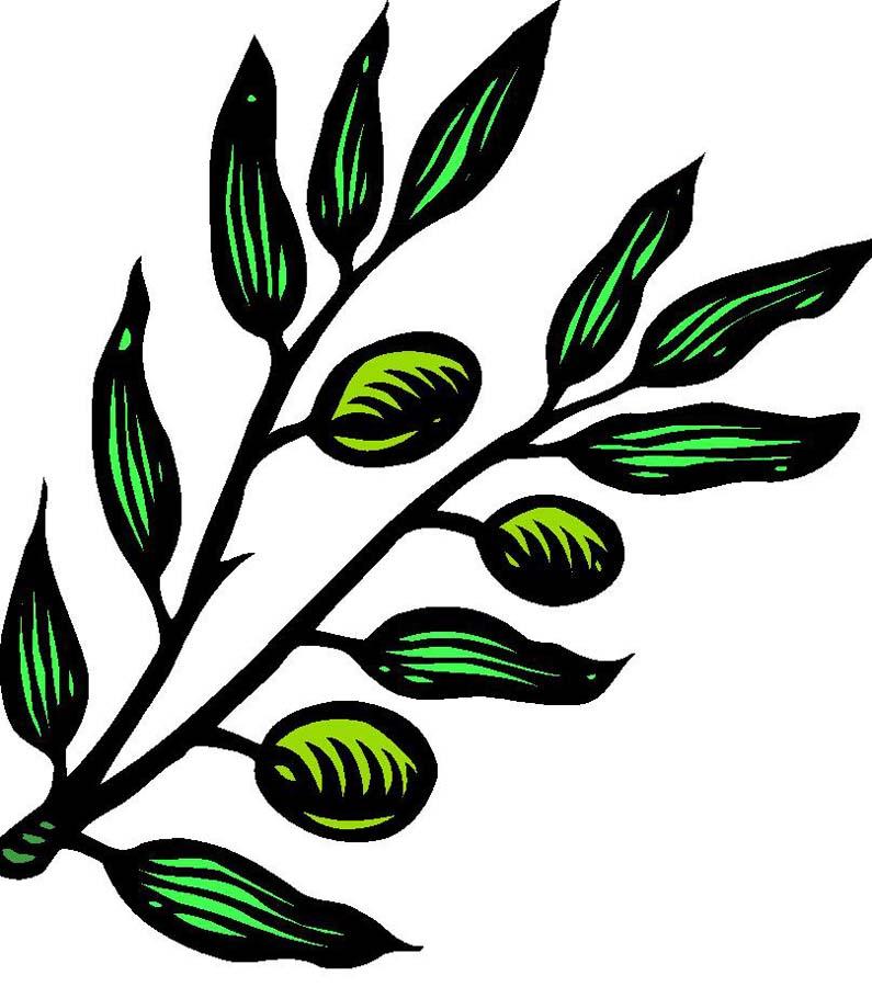 795x900 Olive Branch Clip Art