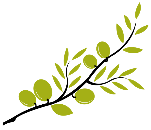 639x548 Olive Branch Clipart