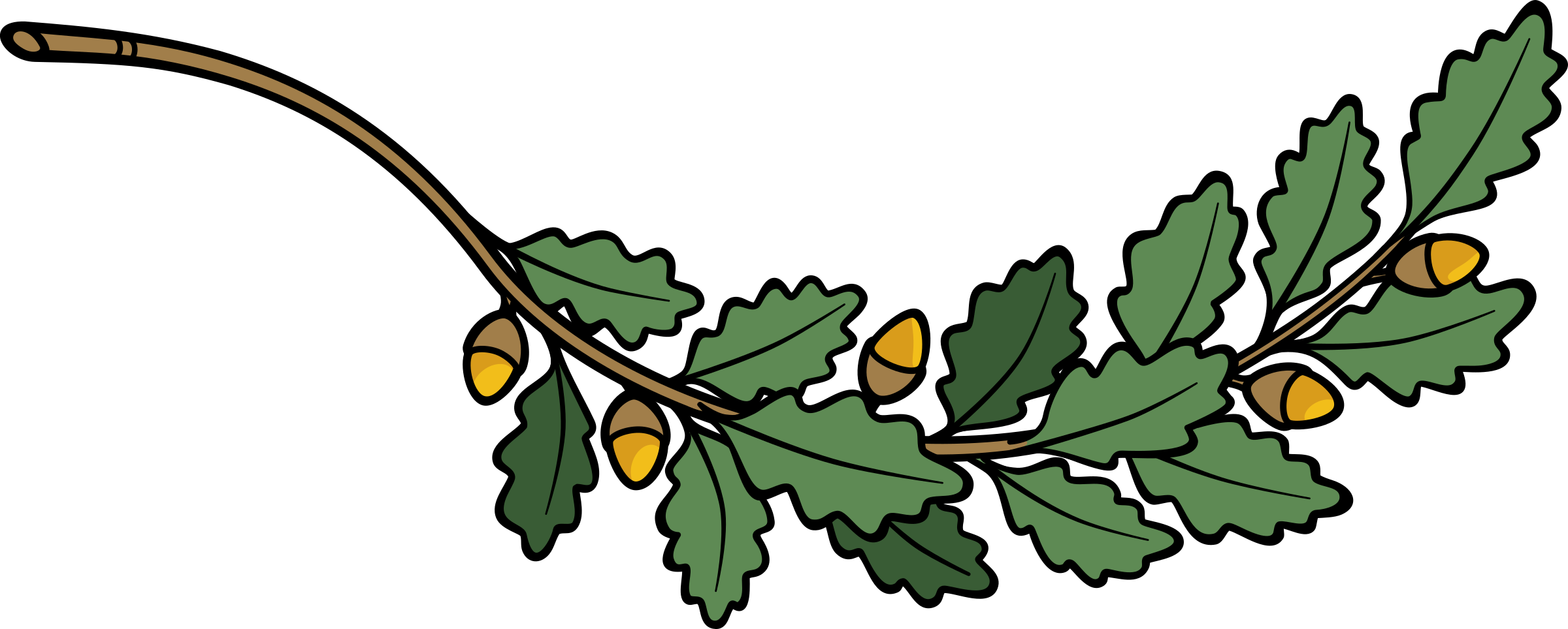 2400x964 Branch Clipart Oak Branch