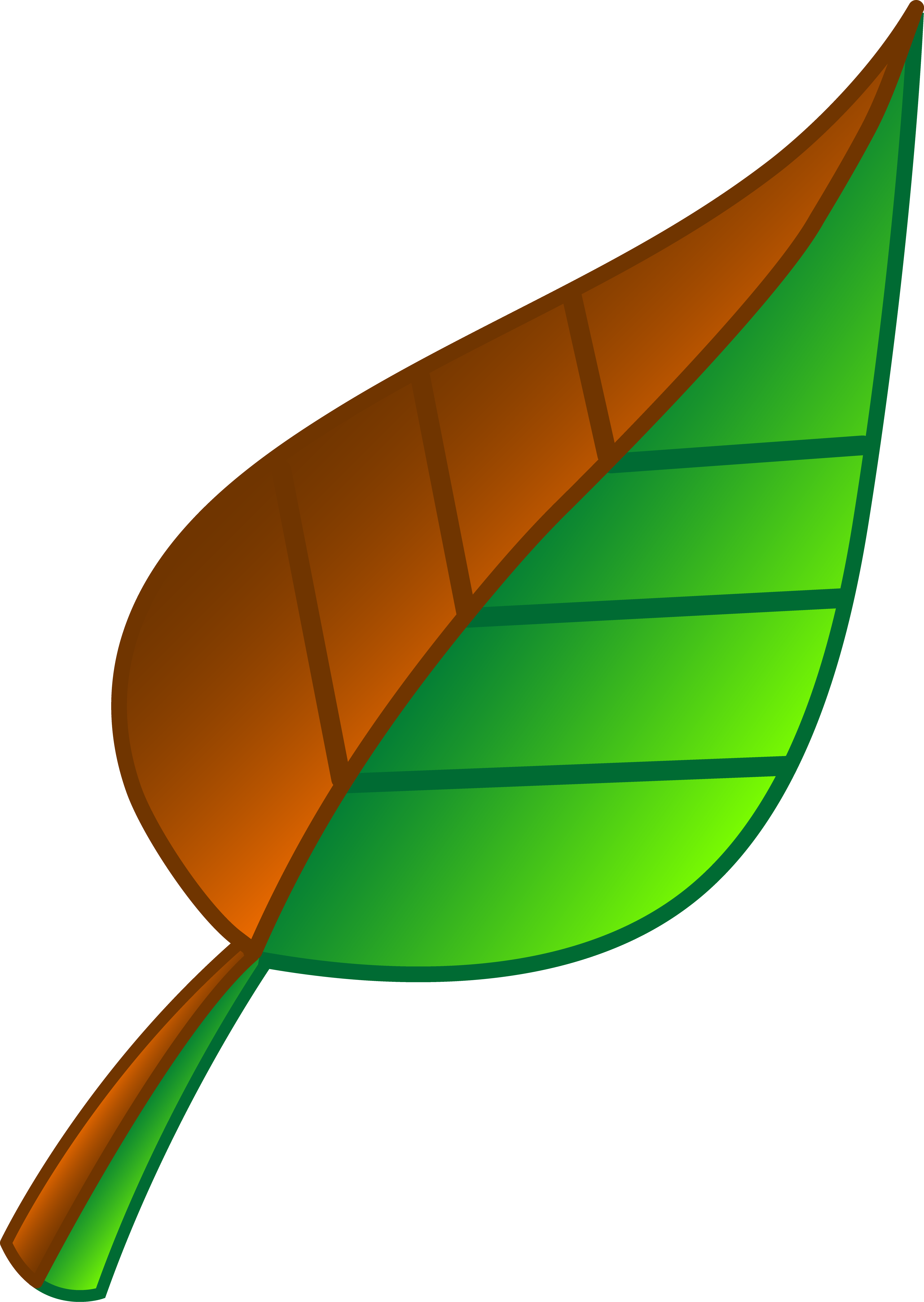 3906x5502 Brown And Green Leaf