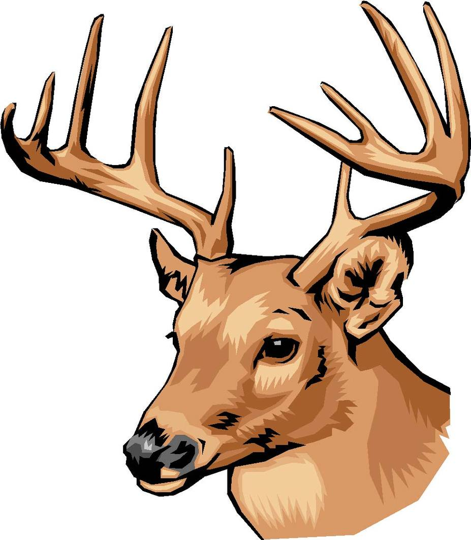 927x1063 Deer Buck Head Clipart