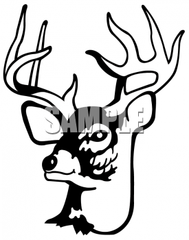 275x350 White Tail Deer Buck Head Clipart
