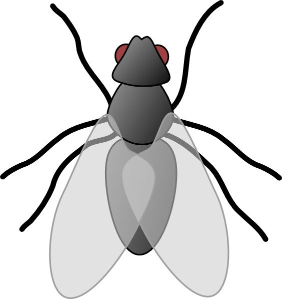 564x597 Fly Bug Insect Clip Art Free Vector In Open Office Drawing Svg