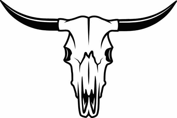600x401 Bull Skull 1 Skeleton Bones Horns Cowboy Country Western Cow