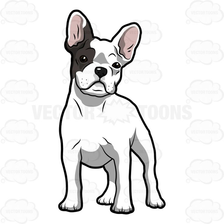 736x736 Spectacular Design French Bulldog Clipart The 25 Best Ideas