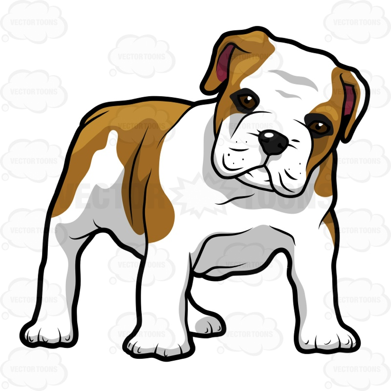 800x800 English Bulldog Puppy Standing And Looking Ahead Cartoon Clipart