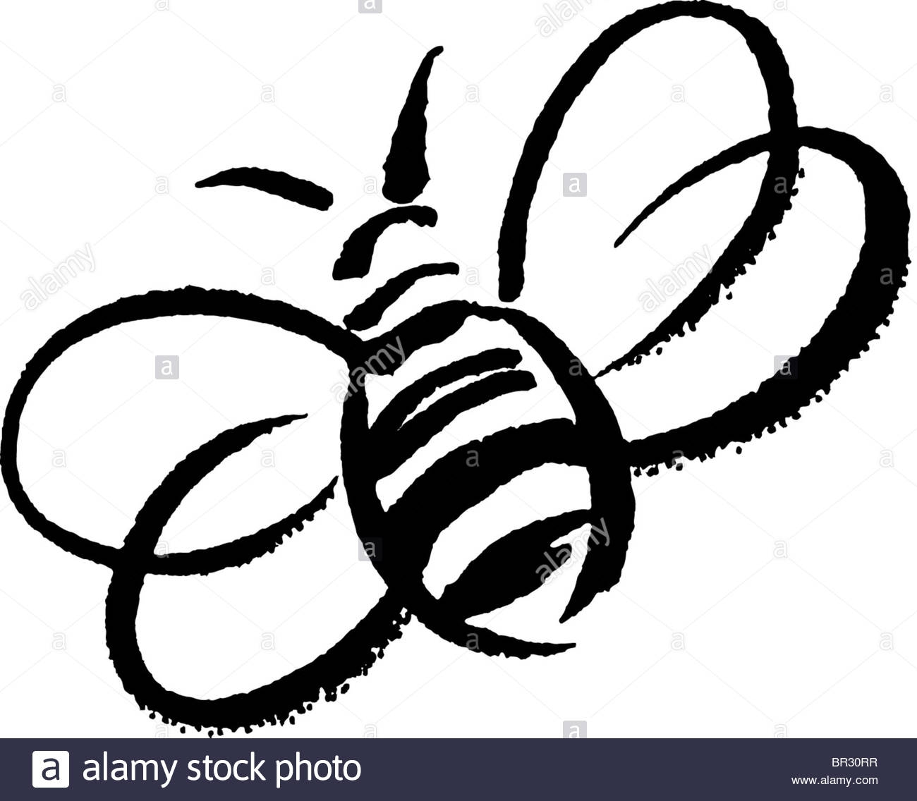 1300x1136 15 Bee Picture Black And White Pictures Black And White Pictures