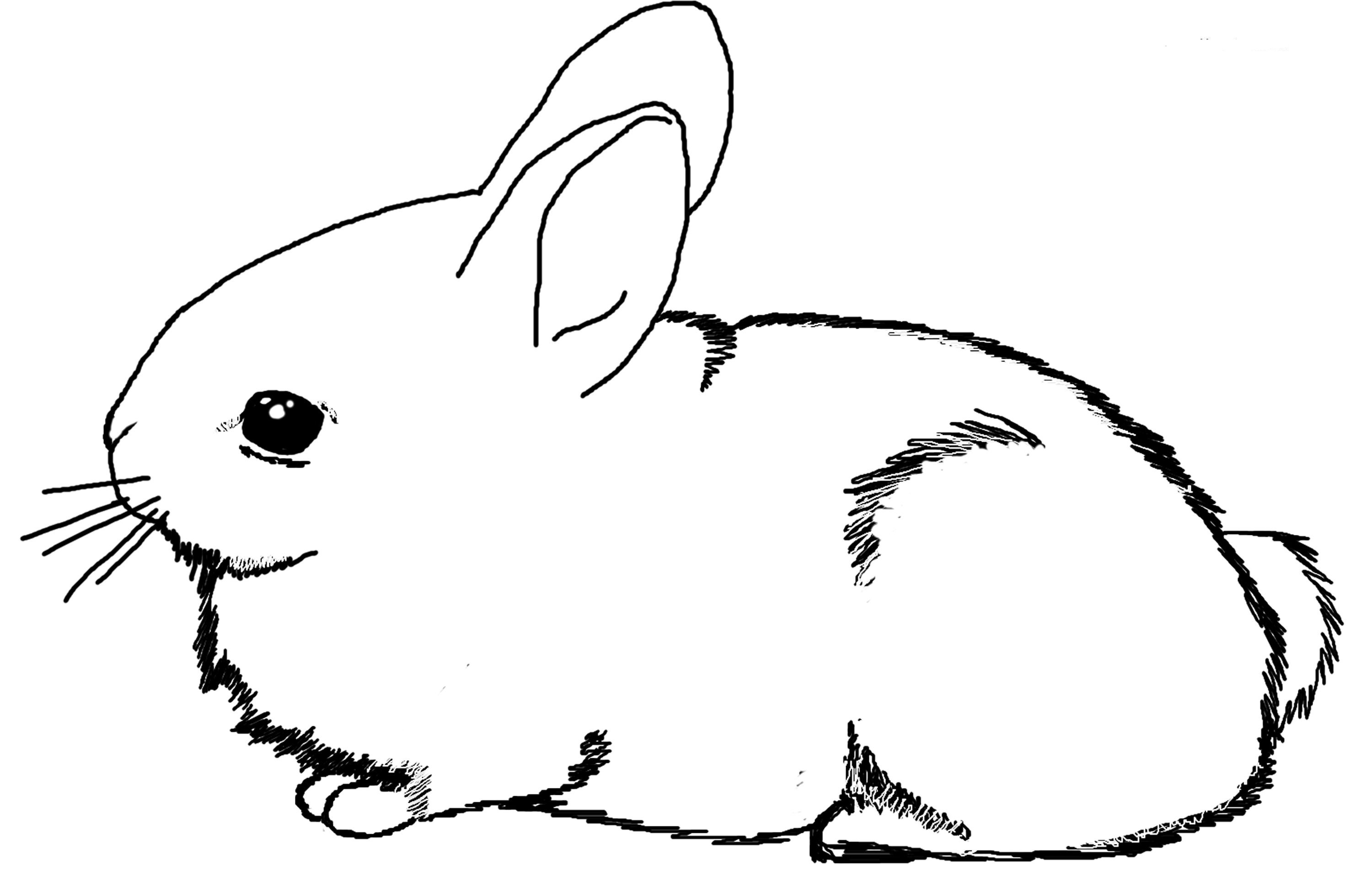 bunnies bunny coloring pages | Bunny Coloring Pages | Free download best Bunny Coloring ...