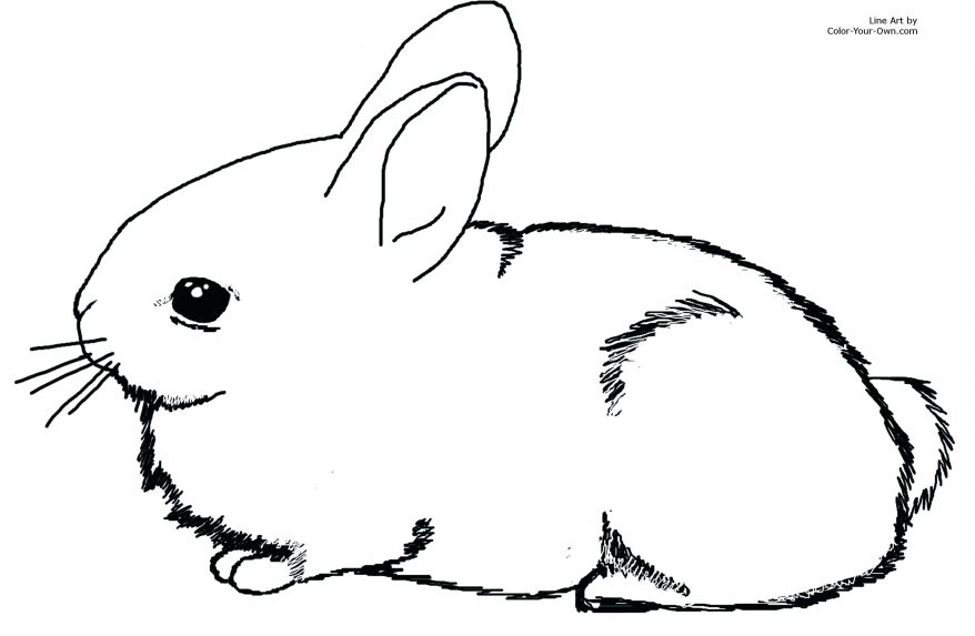 878x573 Adorable Baby Bunny Cottontail Rabbit Coloring Page 25 Cool