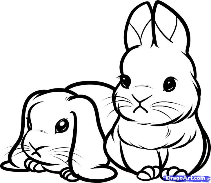 Bunny Coloring Pages | Free download on ClipArtMag