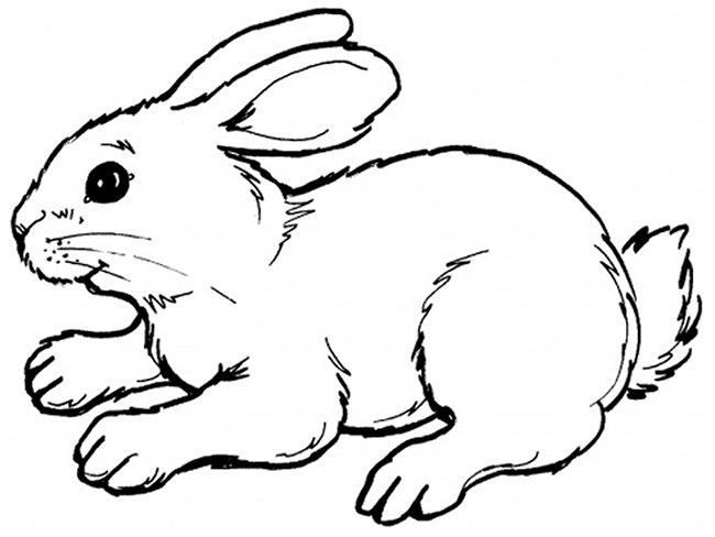 650x488 Rabbit Drawing Outline