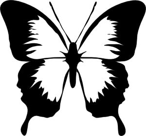 300x280 Best White Butterfly Ideas Beautiful