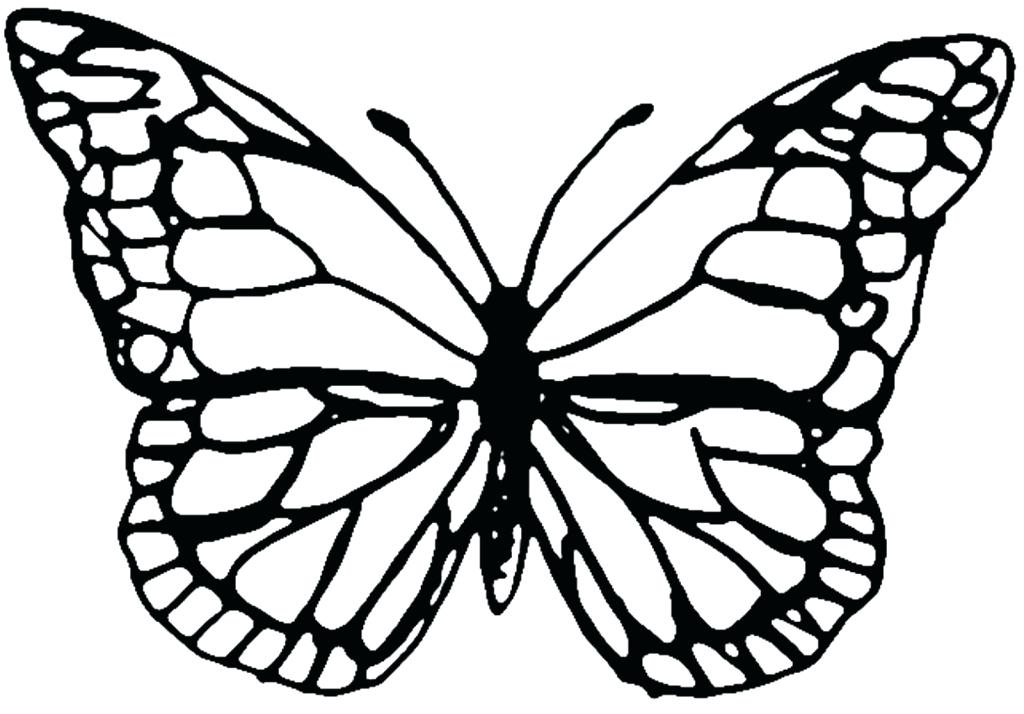 1024x714 Butterfly Outline Clipart Amazing Printable Butterfly Outline Free