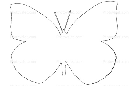 418x279 Best Butterfly Outline