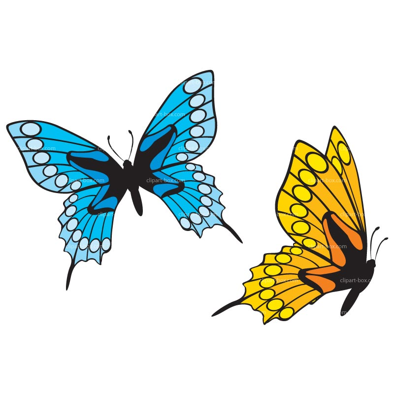 800x800 Japanese Butterfly Clip Art Butterfly Clipart