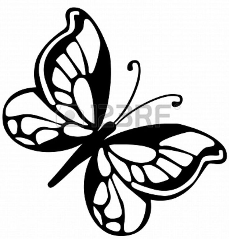 Butterfly Art Pictures