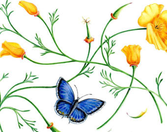 340x270 Blue Butterfly Art Etsy