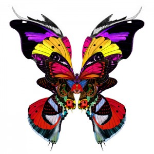 300x300 Butterfly Art