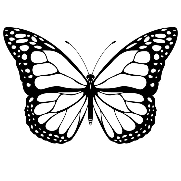 728x728 Butterfly Line Art Free Clipart