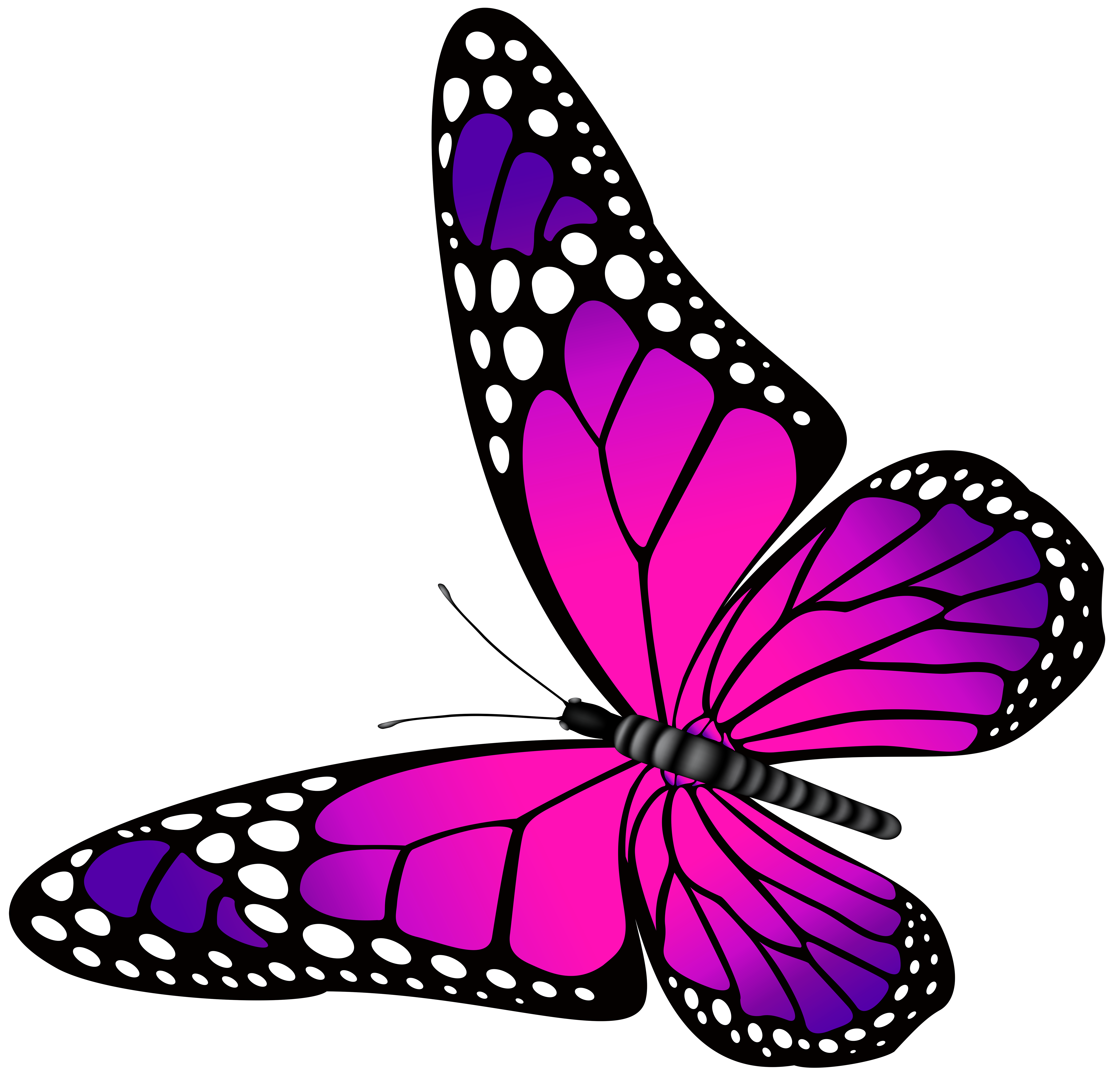 7000x6769 Butterfly Pink and Purple Transparent PNG Clip Art Image