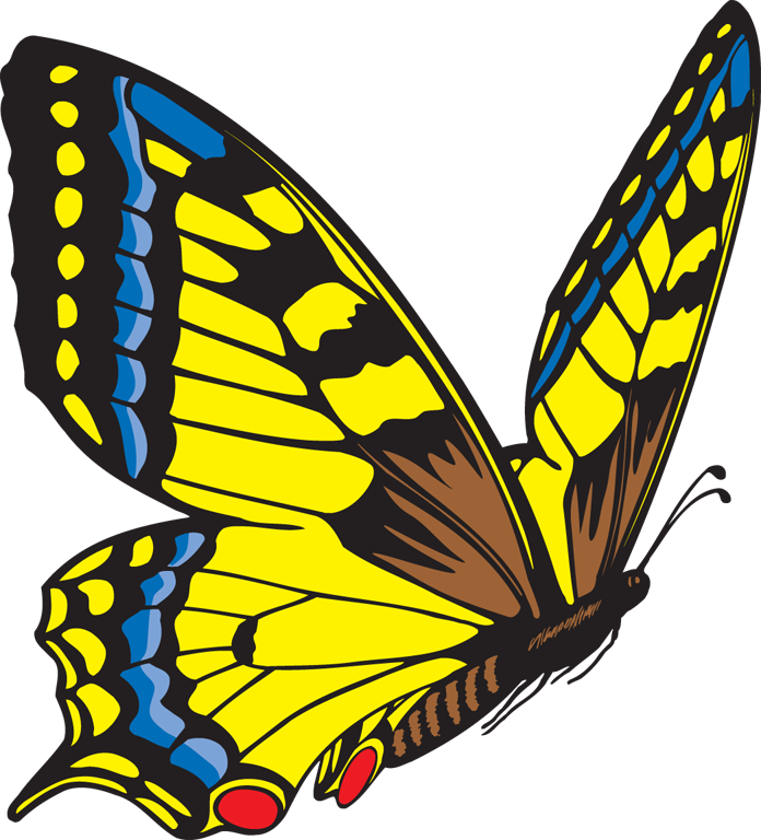 696x768 Butterfly Clipart Free Clipart Images 4