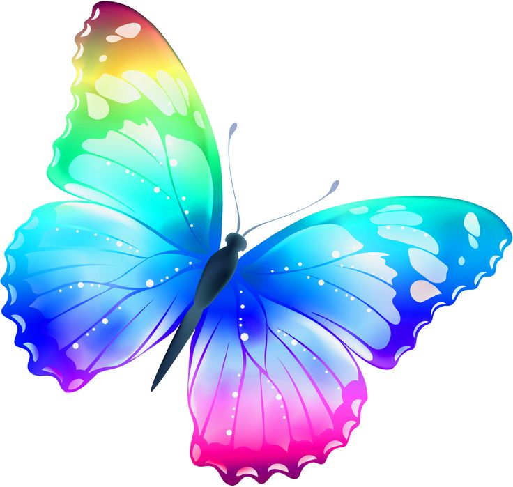 736x699 Butterfly And Clip Art Clipart Panda