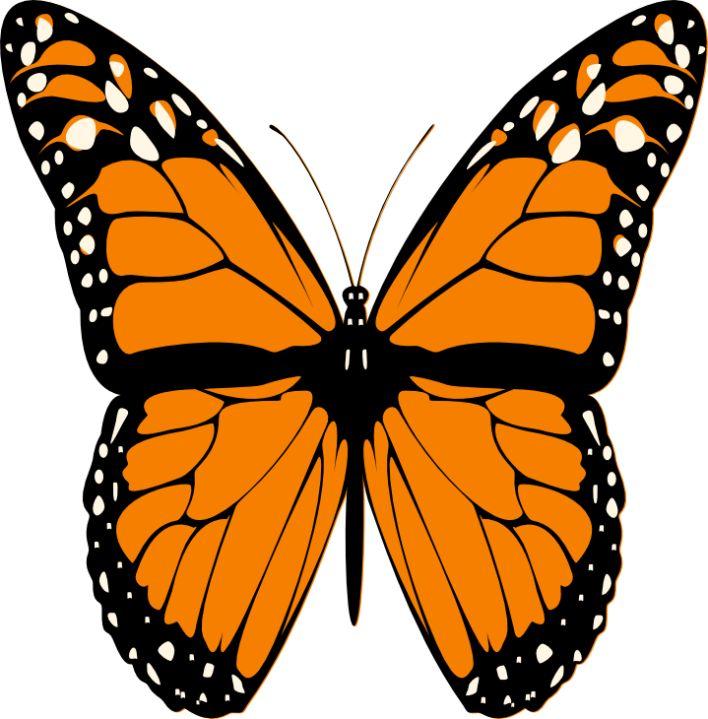 708x719 Rainforest Butterfly Clip Art Cliparts