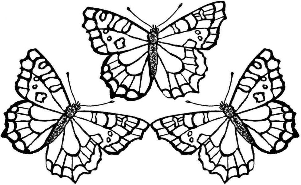 970x597 Coloring Pages Butterfly Coloring Pages Butterfly Coloring Pages