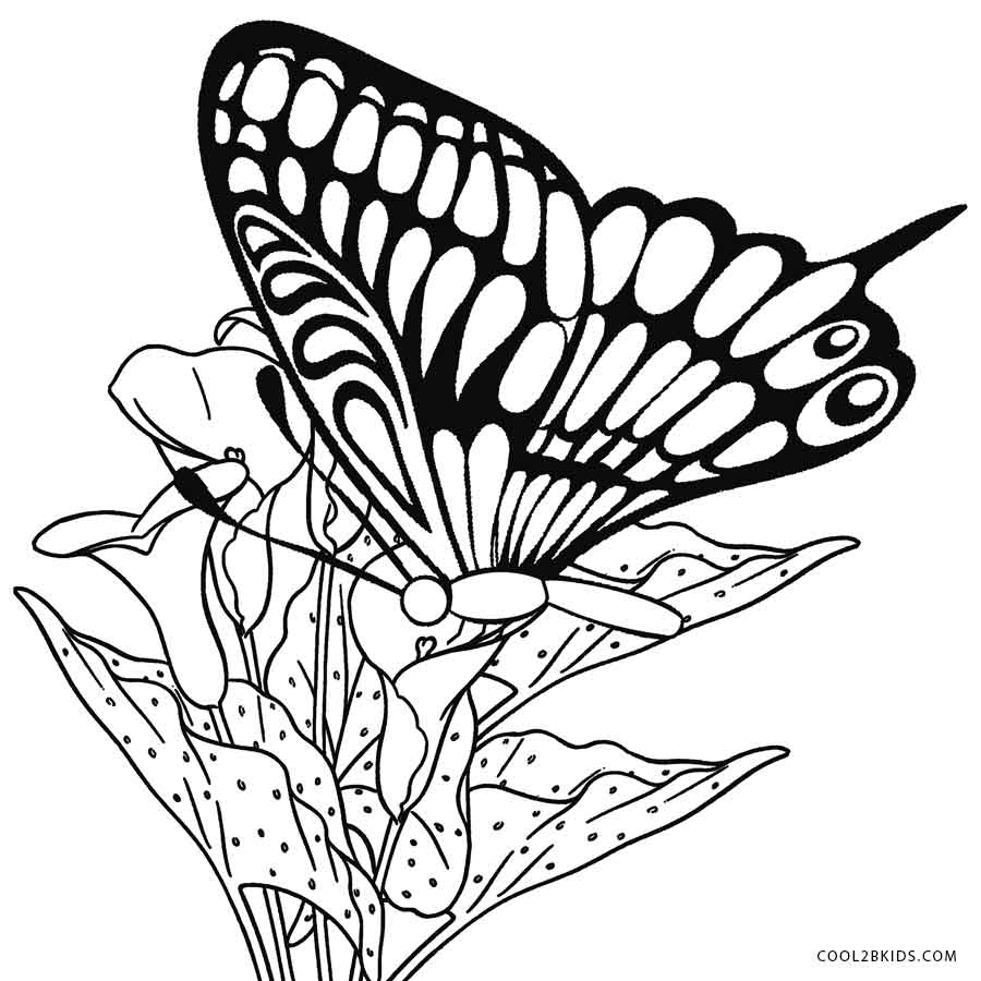 900x900 Printable Butterfly Coloring Pages For Kids Cool2bkids