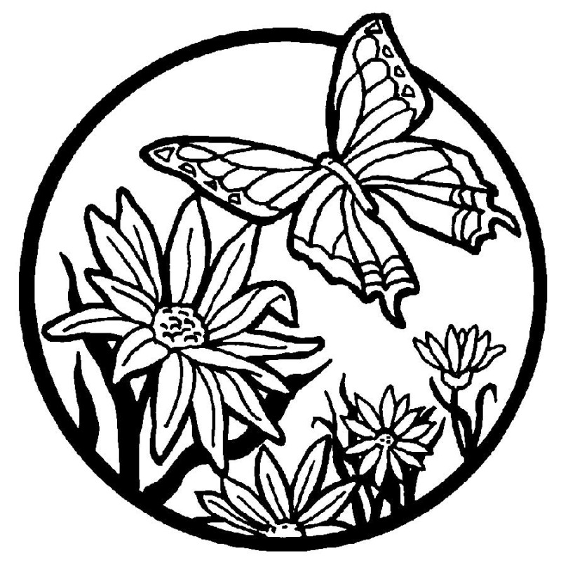 800x835 Cool Butterflies And Flowers Coloring Pages Special Picture