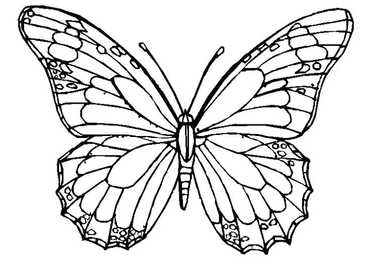 736x536 Beautiful Creation Of Nature Butterfly 20 Coloring Pages