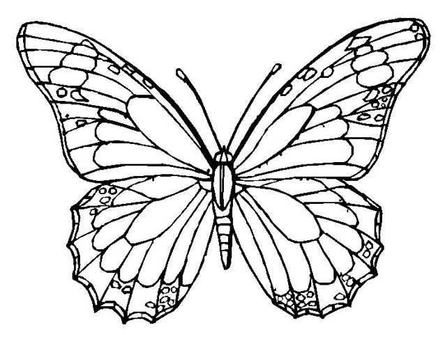 638x490 Butterfly Coloring Page Amp Coloring Book