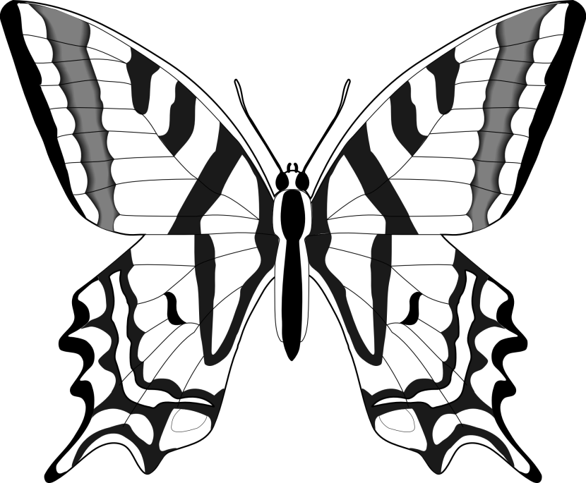 830x685 Butterfly Black And White Butterfly Clipart Black And White 8