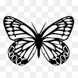 260x261 White Background Butterfly, White, Butterfly, Background Png Image