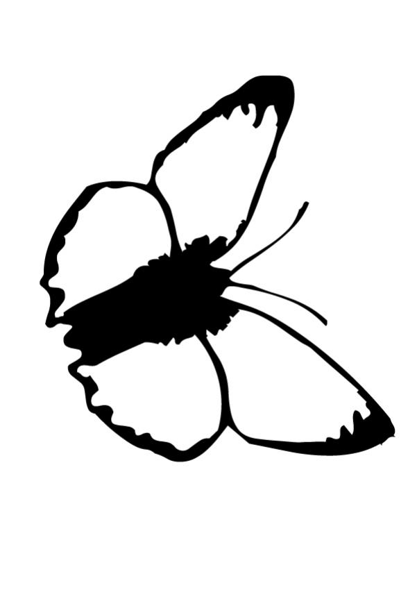 601x850 Black And White Butterfly Coloring Pages