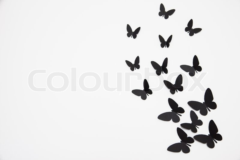 800x533 Black Butterfly Isolated On White Background Stock Photo Colourbox