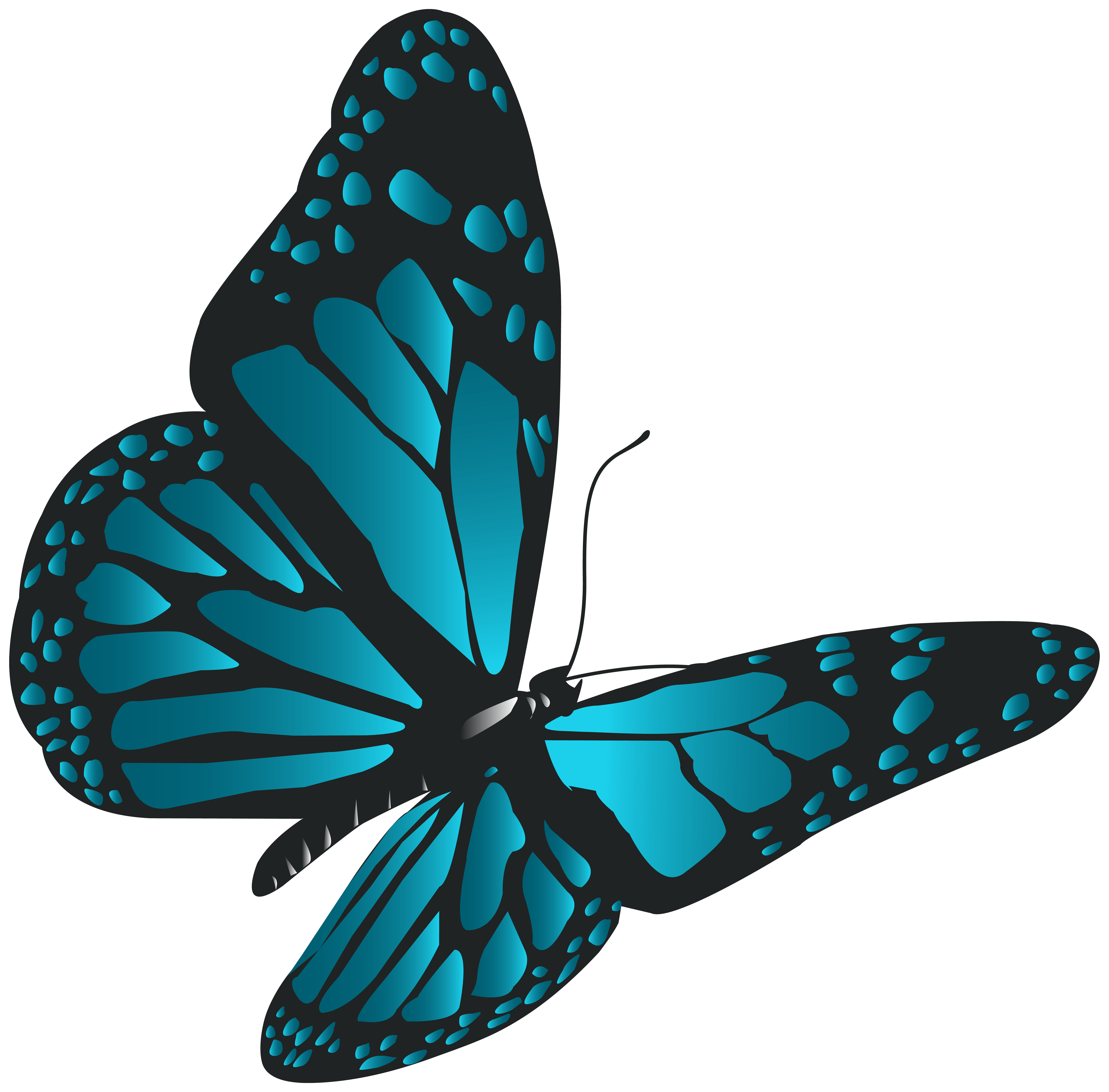 8000x7876 Blue Butterfly Png Clip Artu200b Gallery Yopriceville